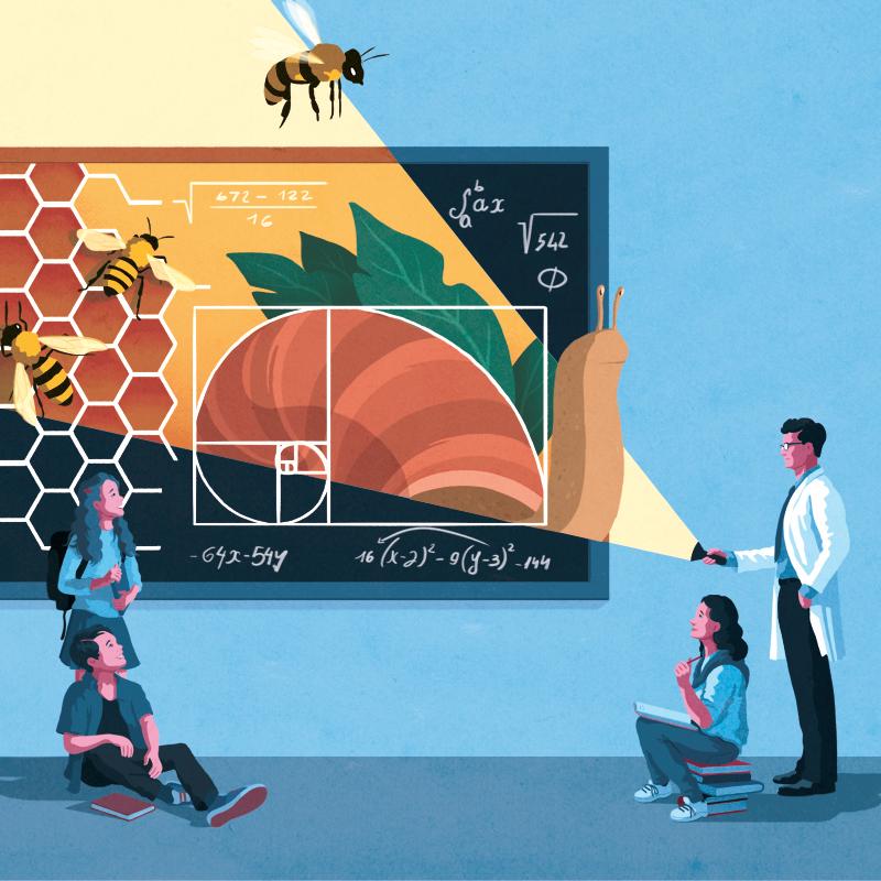 Il laboratorio matematico con Tangram