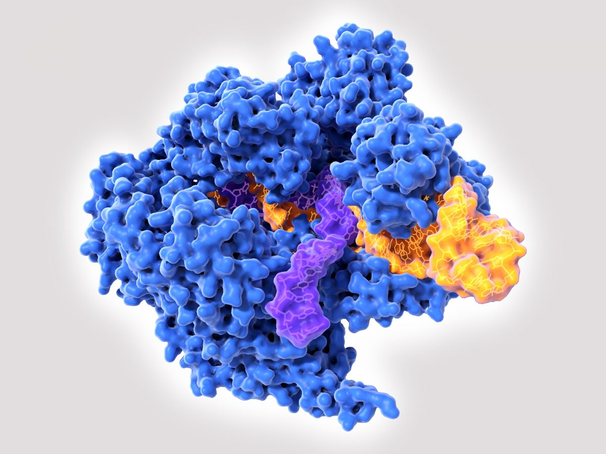 CRISPR e il Nobel per la chimica