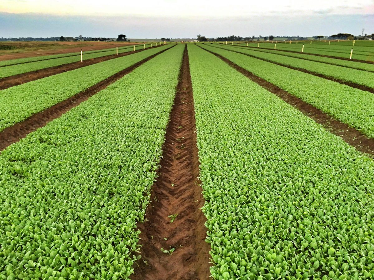Il ruolo dell'agricoltura e l'analisi di vulnerabilità ai cambiamenti climatici